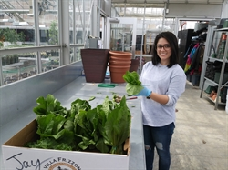 NVCC's Horticulture Students Grow Fresh Produce for Fellow Students Struggling with Food Insecurity